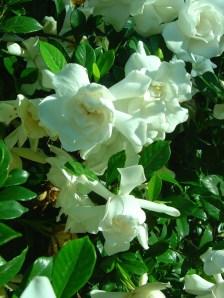 garden flowers june 05_resize