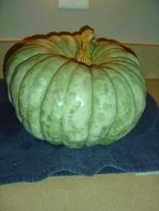Uncle Bob's pumpkin patch 12_resize